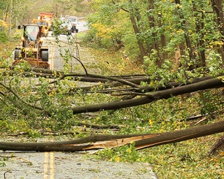 Workers clearing up downed trees after a storm.
